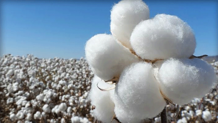 algodón para guantes
